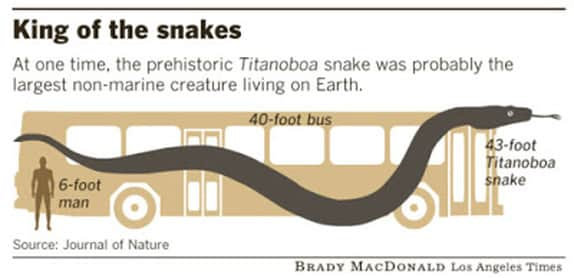 Titanoboa - Snake Facts